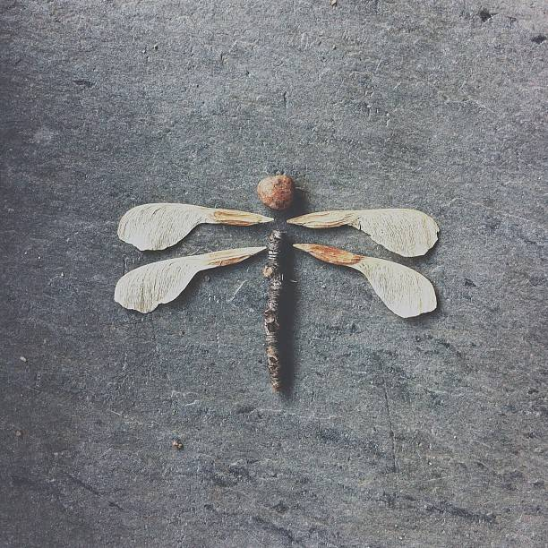 Brock Davis Dragon Fly