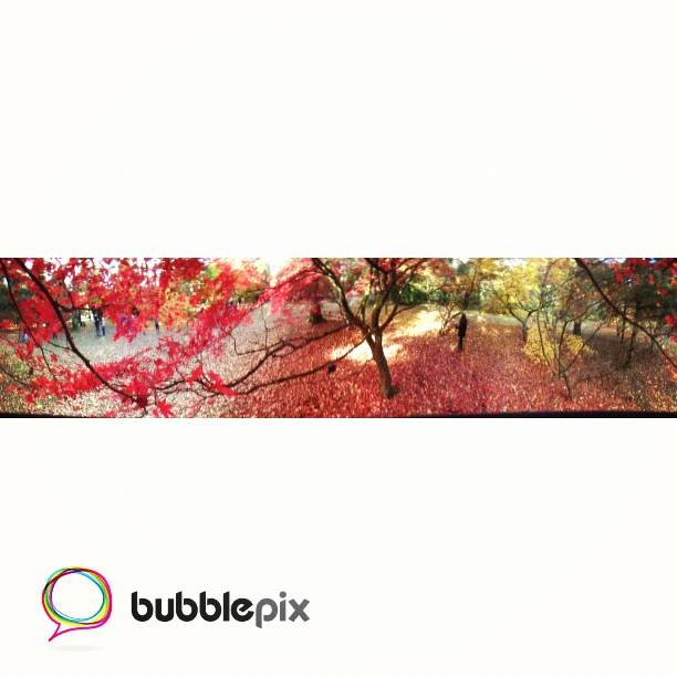 bubblepix3
